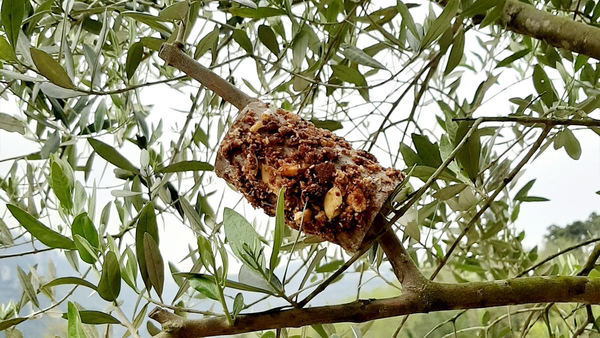 Diamo da mangiare agli uccellini: avvicinare i bambini alla natura