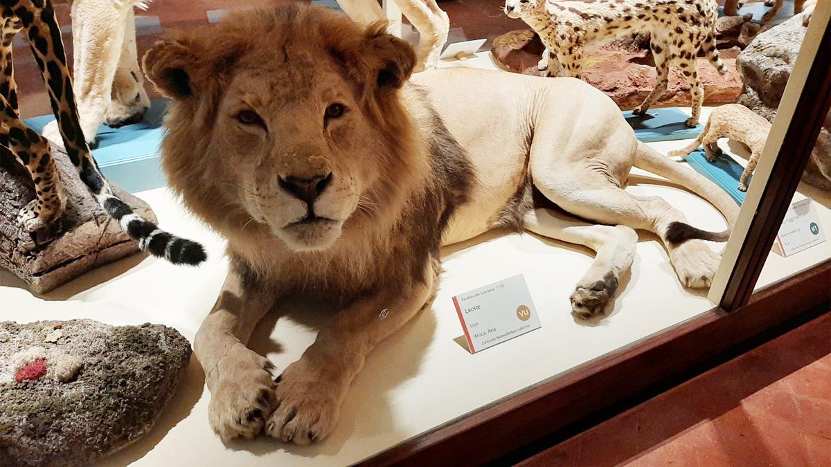 Un Museo a misura di bambino: Il Museo di Storia Naturale di Calci