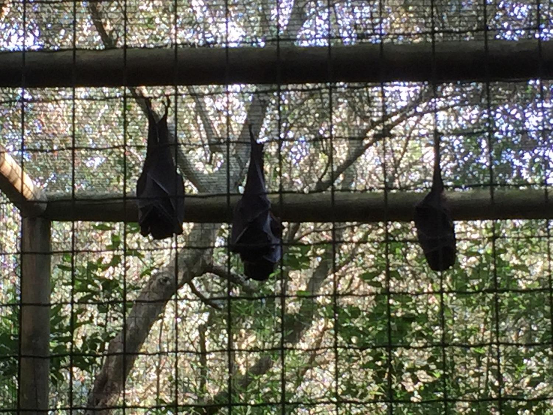 Centinaia di specie animali al Parco Gallorose di Cecina