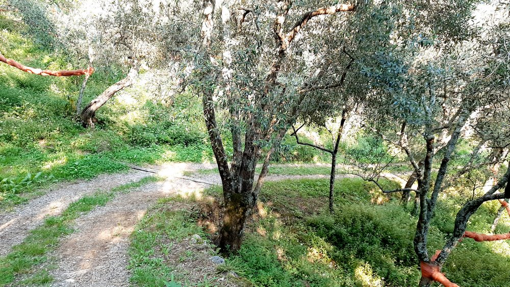 Escursione all'antico villaggio di Montecastrese
