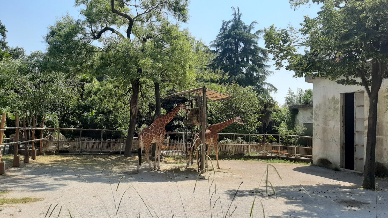 Giardino Zoologico di Pistoia: a tu per tu con la biologa