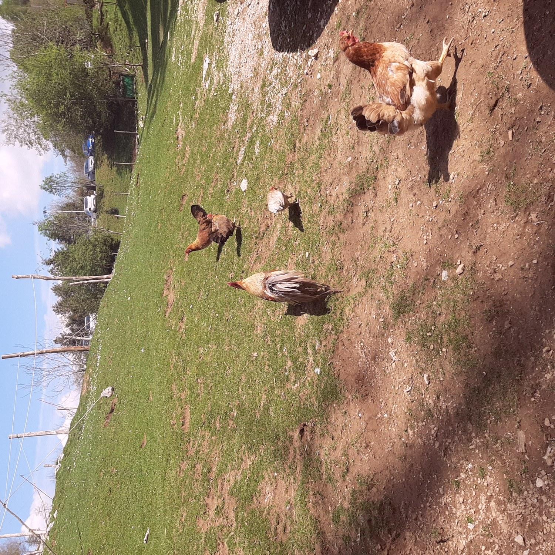 Un pic nic insieme ai cavalli liberi del Matanna