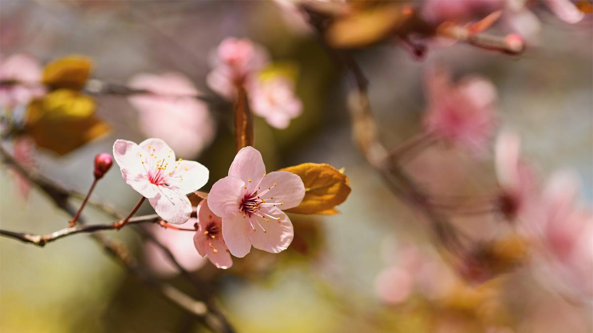 Equinozio di Primavera: sabato 20 marzo